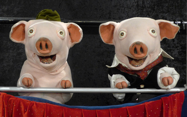 Two pig puppets